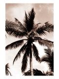 Sepia Palm 3