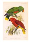 Joseph Smit Parrots Plate 26