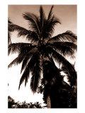 Sepia Palm 4