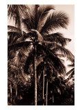 Sepia Palm 2