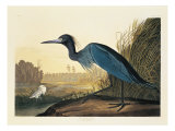 Blue Crane or Heron Plate 307