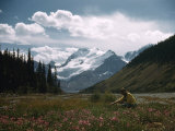 Woman Picks Fireweed Flowers in a Valley Below Mount Athabasca