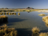 Saline Ponds Near Tecopa  in the Mojave Desert
