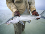 Fisherman Holds Out a Bonefish Off Great Exuma Island