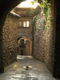 Cat Resting in the Middle of a Cobblestone Street in Gubbio  Italy