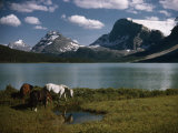 Horses Graze in a Lakeside Meadow in the Canadian Rockies