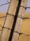 Gate Posts Join a Barbed Wire Fence by Dry Creek Road