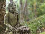 Tranquil Seated Buddha Statue in Bali's Lush Tropical Forest