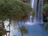 Havasu Falls Behind a Grove of Trees