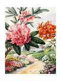 Painting of Catawba Rhododendron and Flame Azaleas