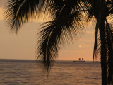 Palm Tree and a Traditional Hawaiian Boat or Wa'Akaulua at Sunset