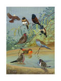 Various Birds Rest in a Birdbath and on Branches That Hang Above