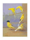 Various Birds of the Canary Family Perch in a Cage