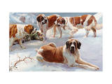 Saint Bernard Dogs Help to Save Half-Frozen War Refugee