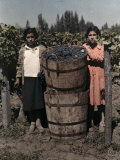 Two Women Stand with Barrels of Grapes Used to Make Wine