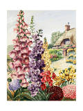 European Garden with Foxglove  Stock  Wallflower  and Scabiosa