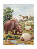 Toxodon  Glyptodon and Macrauchenias Lived in South America