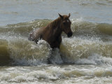 Horse Rides the Waves in the Atlantic Ocean