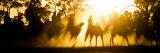 Camels Walking Along Dry River Bed at Sunset  Kicking Up Sand