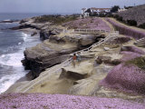 Wind and Waves Carve Fantastic Forms in La Jolla's Cliffs