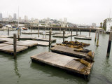 Famous Pier 39 Docks That are Usually Crowded with Sea Lions