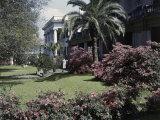 Azaleas Bloom in a Historic Mansion's Front Garden