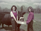 Teen Girls Feed an Aberdeen-Angus Bull Fat-Forming Sweet Potatoes
