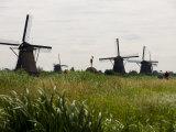 Windmills in a Field in the Netherlands