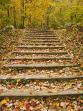 Fallen Leaves Cover a Wooden Staircase in Autumn  Vermont