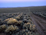 Dirt Road Through Sagebrush Country at Dusk