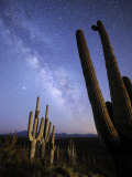 Stars and the Milky Way Above a Hillside of Saguaro Cactus