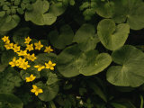 Small Yellow Flowers Growing Among Lush Foliage