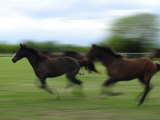 Galloping Horses at a Ranch
