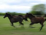 Galloping Horses at a Ranch