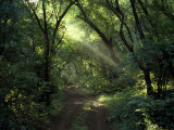 Rays of Sunlight Pass Through a Forest Canopy over a Trail