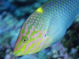 Reef Fish in Kingman Reef