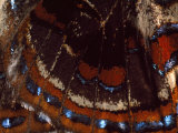 Close View of the Wing of a Butterfly