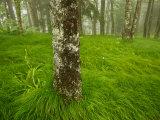 Pennsylvania Sedge Grass Flows over Black Camp Gap in June