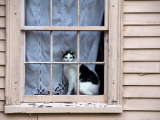 Black and White Cat Looking Out the Window of an Historic Home