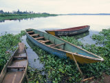 Wooden Fishing Boats Amongst the Noxious Aquatic Plant Water Hyacinth