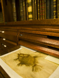 Books and Fish Print in the Library of Carl Linnaeus