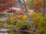 Soft Maple Tree at Long Pond in the Fall