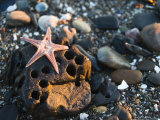 Underneath Side of a Sea Star Washed Up on a Rocky Beach