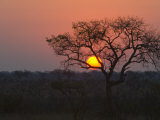 Sunset over a Mopani Forest in Kruger National Park