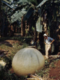 Woman Studies Large Manmade Stone Sphere Resting in Banana Field