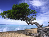 Waves Splash onto a Beach with a Gnarly Tree