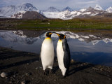 King Penguins Touching Bills in Scenic Mountain Landscape