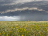Thunderstorm Turns into a Gustfront over a Daisy Field in Nebraska