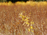 Native Grasses Display Autumn Colors