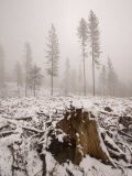 Logged Area of the Stanislaus National Forest in Winter